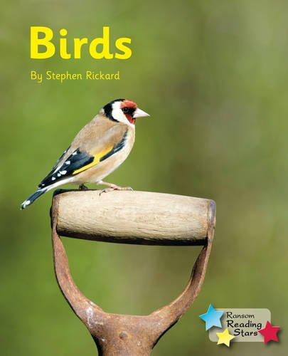 Birds (Reading Stars): Rickard, Stephen