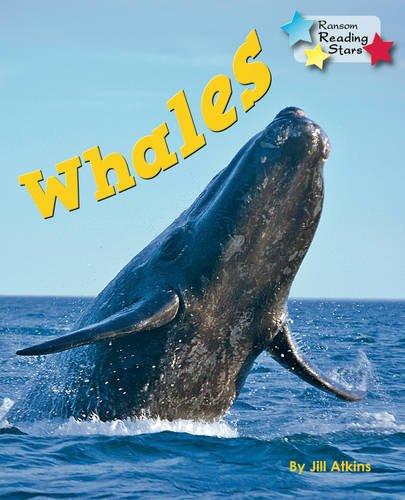 Whales (Reading Stars): Atkins, Jill