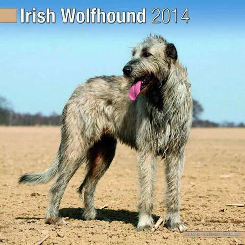 9781782080619: Irish Wolfhound 2014