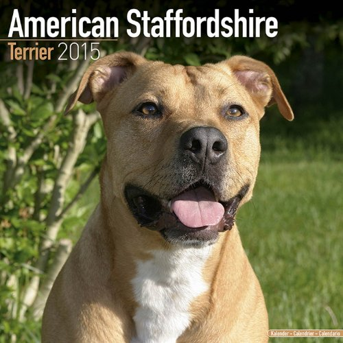 9781782081463: American Staffordshire Terrier Calendar - Brees Specific American Staffordshire Terriers Calendar - 2015 Wall calendars - Dog Calendars - Monthly Wall Calendar by Avonside