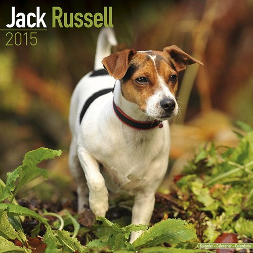 9781782082026: Jack Russell Calendar - Breed Specific Jack Russell Calendar - 2015 Wall calendars - Dog Calendars - Monthly Wall Calendar by Avonside