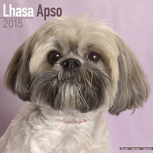 9781782082095: Lhasa Apso Calendar - Only Dog Breed Lhasa Apso Calendar - 2015 Wall calendars - Dog Calendars - Monthly Wall Calendar by Avonside