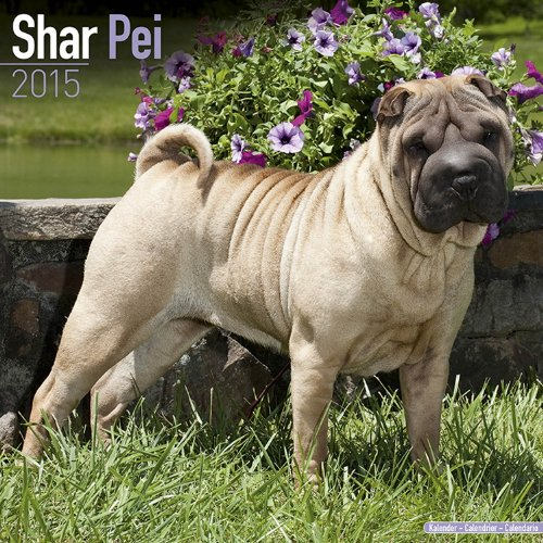 9781782082354: Shar Pei Calendar - Breed Specific Shar Pei Calendar - 2015 Wall calendars - Dog Calendars - Monthly Wall Calendar by Avonside