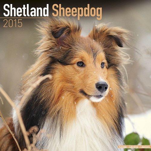 9781782082361: Shetland Sheepdog Calendar - Breed Specific Shetland Sheepdog Calendar - 2015 Wall calendars - Dog Calendars - Monthly Wall Calendar by Avonside