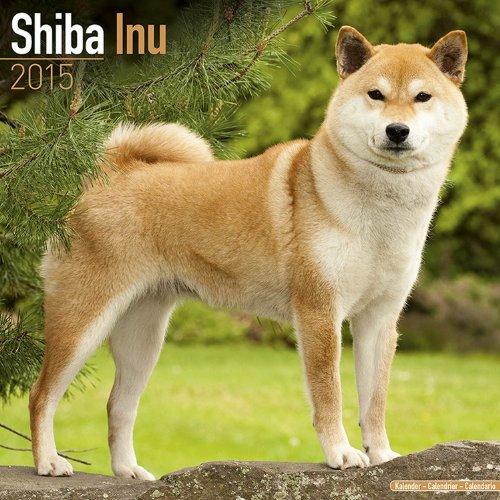 9781782082378: Shiba Inu Calendar - Breed Specific Shiba Inu Calendar - 2015 Wall calendars - Dog Calendars - Monthly Wall Calendar by Avonside