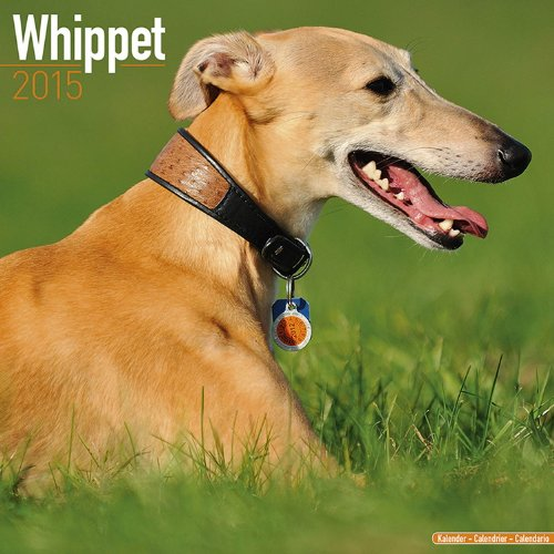 9781782082507: Whippet 2015 (Square)