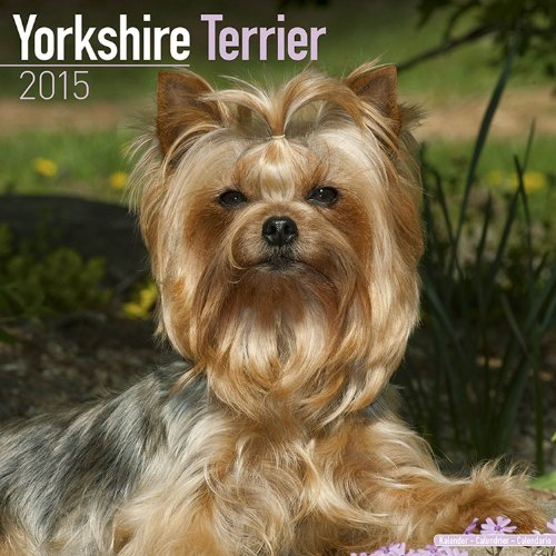 9781782082521: Yorkshire Terrier Calendar - Only Dog Breed Yorkshire Terrier Calendar - 2015 Wall calendars - Dog Calendars - Monthly Wall Calendar by Avonside