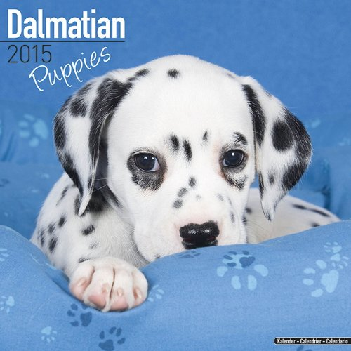 9781782082552: Dalmatian Puppies Calendar - Breed Specific Dalmatian Puppies Calendar - 2015 Wall calendars - Dog Calendars - Monthly Wall Calendar by Avonside