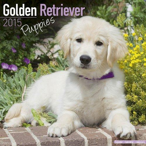 9781782082576: Golden Retriever Puppies Calendar - Only Dog Breed Golden Retriever Puppies Calendar - 2015 Wall calendars - Dog Calendars - Monthly Wall Calendar by Avonside
