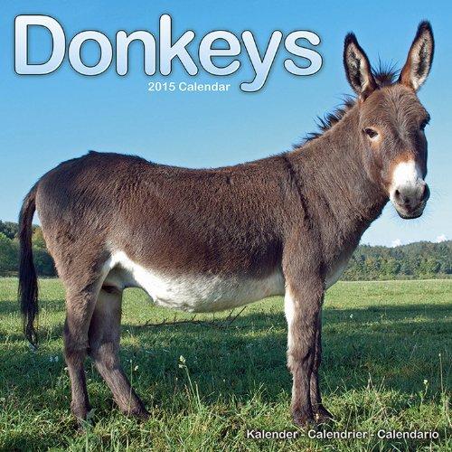 9781782082828: Donkeys Calendar - 2015 Wall calendars - Animal Calendar - Monthly Wall Calendar by Avonside