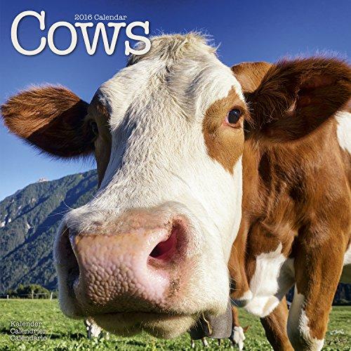 9781782084433: Cows Calendar 2016 2016 (Square)