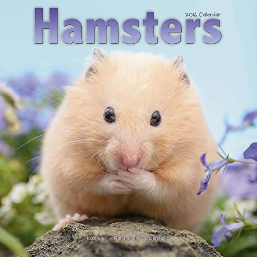 9781782084549: Hamsters Calendar 2016 (Square)