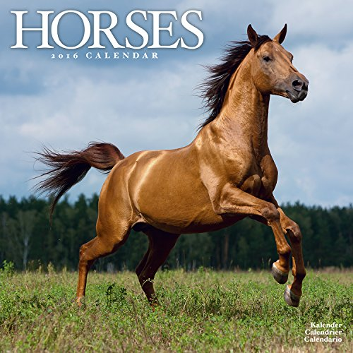 9781782084556: Horses Calendar - 2016 Wall calendars - Animal Calendar - Monthly Wall Calendar by Avonside