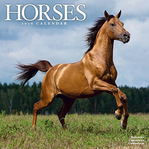 9781782084556: Horses Calendar 2016