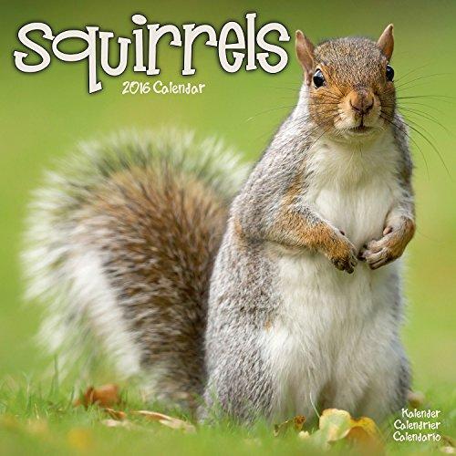 9781782084679: Squirrels Calendar - 2016 Wall calendars - Animal Calendar - Monthly Wall Calendar by Avonside
