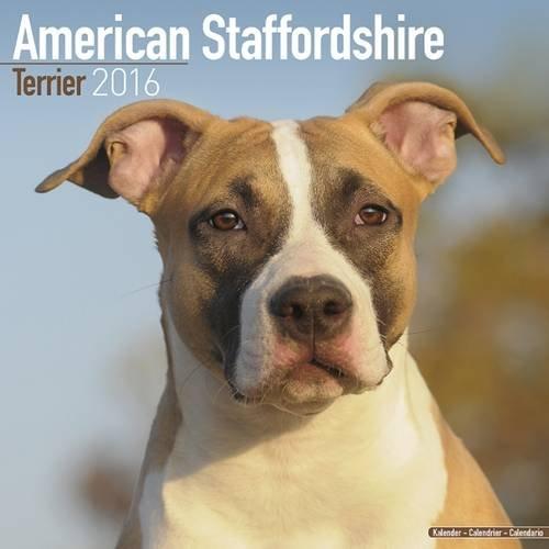 9781782085287: American Staffordshire Terrier Calendar 2016