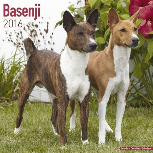 9781782085317: Basenji Calendar 2016