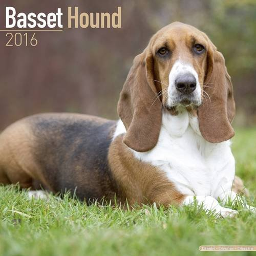 9781782085324: Basset Hound Calendar - Only Dog Breed Basset Hounds Calendar - 2016 Wall calendars - Hound Dog Calendars - Monthly Wall Calendar by Avonside