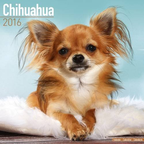 9781782085553: Chihuahua Calendar - Only Dog Breed Chihuahua Calendar - 2016 Wall calendars - Dog Calendars - Monthly Wall Calendar by Avonside