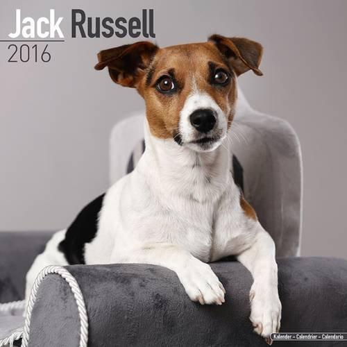 9781782085829: Jack Russell Calendar - Only Dog Breed Jack Russell Calendar - 2016 Wall calendars - Dog Calendars - Monthly Wall Calendar by Avonside