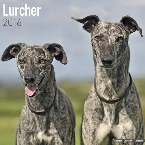 9781782085898: Lurcher Calendar 2016