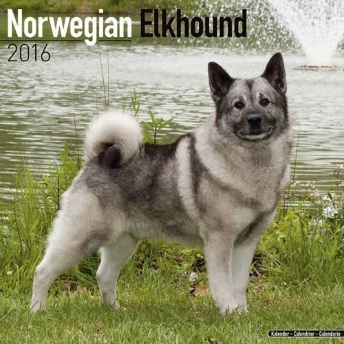 9781782085942: Norwegian Elkhound Calendar 2016