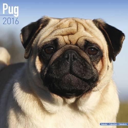9781782086048: Pug Calendar 2016