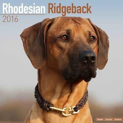 9781782086062: Rhodesian Ridgeback Calendar 2016 (Square)