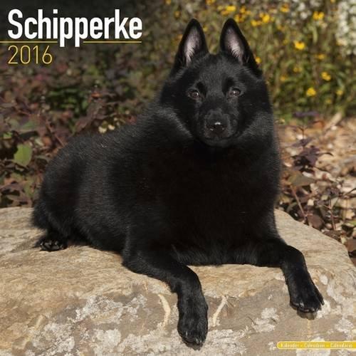 9781782086093: Schipperke Calendar - Breed Specific Schipperke Calendar - 2016 Wall calendars - Dog Calendars - Monthly Wall Calendar by Avonside