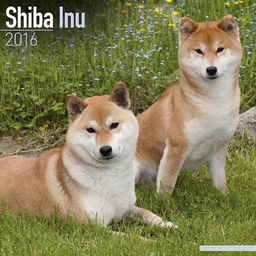 9781782086154: Shiba Inu Calendar - Breed Specific Shiba Inu Calendar - 2016 Wall calendars - Dog Calendars - Monthly Wall Calendar by Avonside