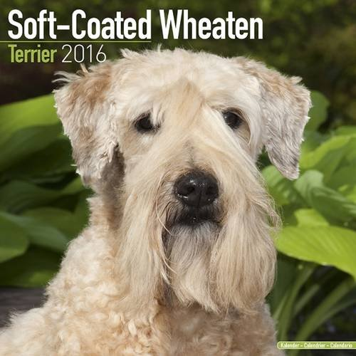 9781782086192: Soft Coated Wheaten Terrier Calendar 2016