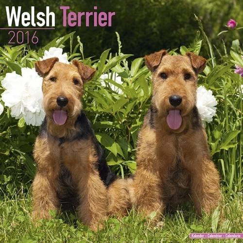 9781782086260: Welsh Terrier Calendar 2016