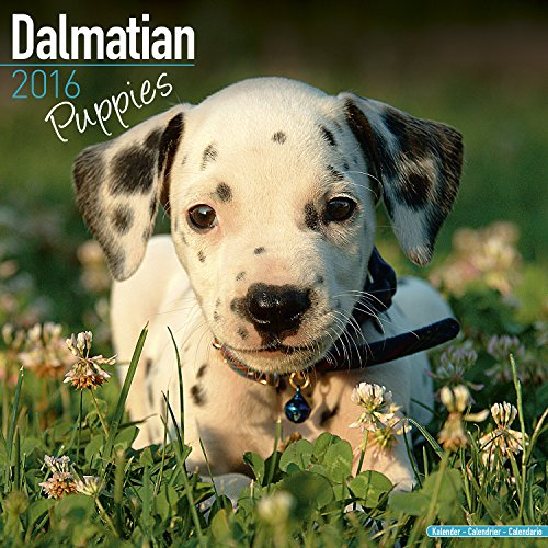 9781782086338: Dalmatian Puppies Calendar - Breed Specific Dalmatian Puppies Calendar - 2016 Wall calendars - Dog Calendars - Monthly Wall Calendar by Avonside