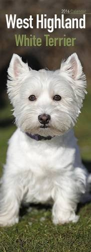 9781782086697: West Highland White Terrier Slim Calendar 2016 (Slim Standard)