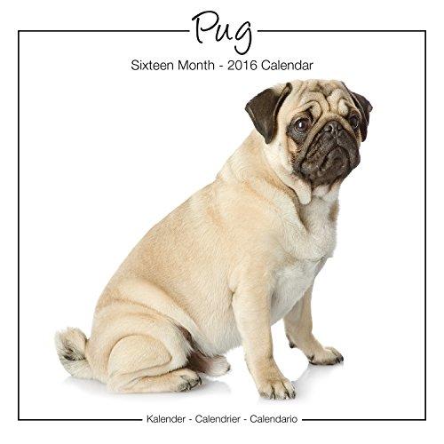 9781782086888: Pug Studio Calendar 2016