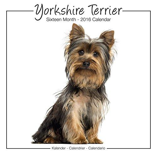 9781782086895: Yorkshire Terrier Studio Calendar 2016