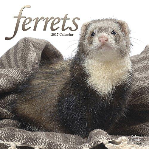 Ferrets Wall Calendar 2020 by Avonside