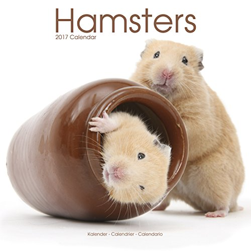 9781782088646: Hamster Calendar - Cute Animal Calendar - Calendars 2016 - 2017 Wall Calendars - Animal Calendar - Hamsters 16 Month Wall Calendar by Avonside