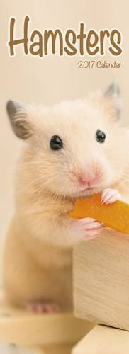 9781782089582: Hamsters Slim Calendar 2017 (Slim Standard)