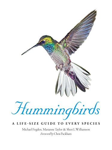 9781782404224: Hummingbirds A Life-Size Guide to Every Species /anglais