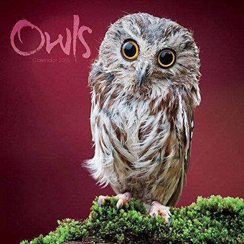 9781782935438: Owls 2015 Calendar