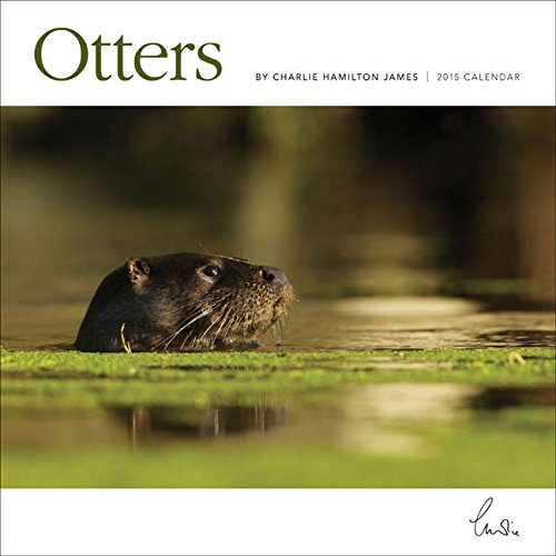 9781782935872: Otters 2015 Wall Calendar (Square)