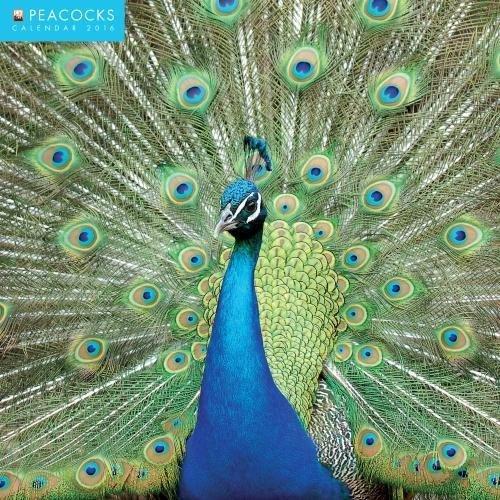 9781783614707: Peacocks 2016 Square 12x12 Flame Tree