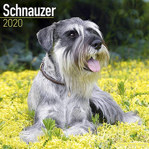 9781785806506: Schnauzer Calendar 2020
