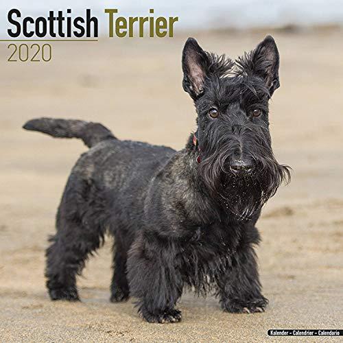 9781785806537: Scottish Terrier Calendar 2020