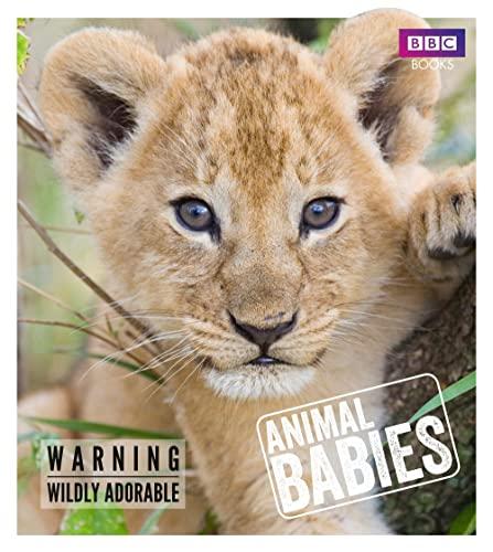 9781785941009: Animal Babies