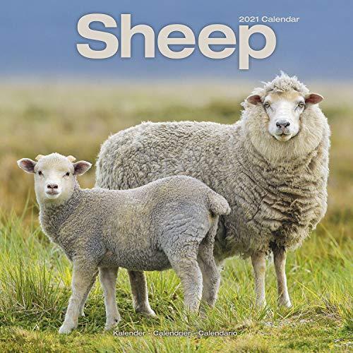 9781839410314: Sheep 2021 Calendar (Square)