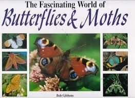 The Fascinating World Of Butterflies & Moths: Gibbons, Bob