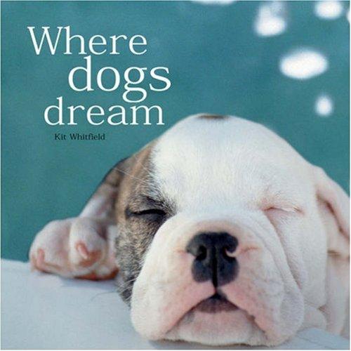 9781840724332: Where Dogs Dream