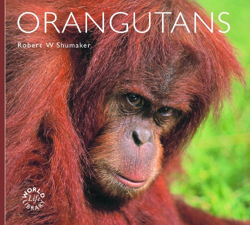 9781841073699: Orangutans (World Life Library)